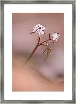 Harbinger Of Spring Framed Print