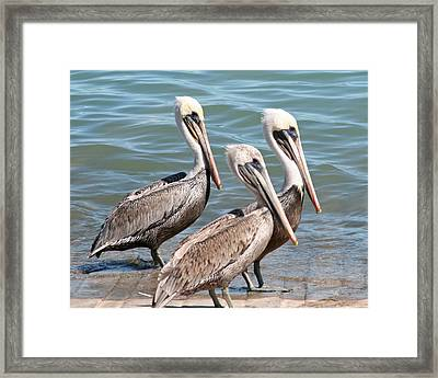 Framed Print featuring the photograph Harbor Masters by Dick Botkin