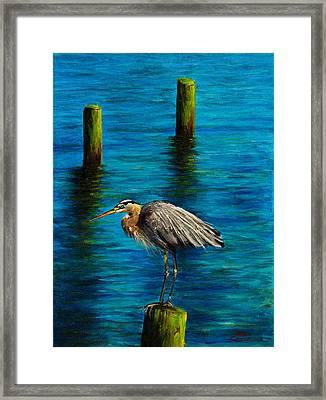 Harbor Sentry Framed Print by C Steele
