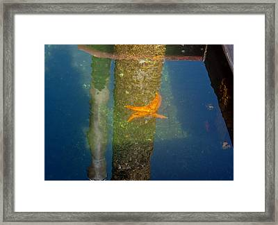 Harbor Star Fish Framed Print