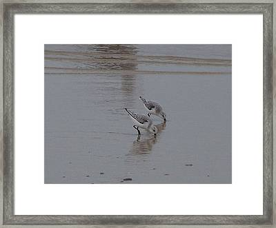 Framed Print featuring the photograph Hard At Work by Christine Drake