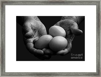Hard-working Hands Gathering Eggs Framed Print by Thomas R Fletcher