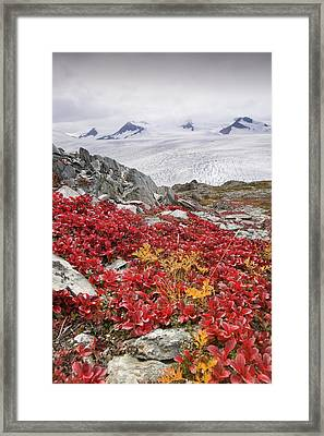 Harding Ice Field Framed Print