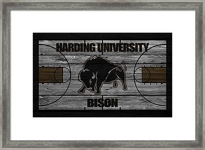 Harding University Bison Framed Print