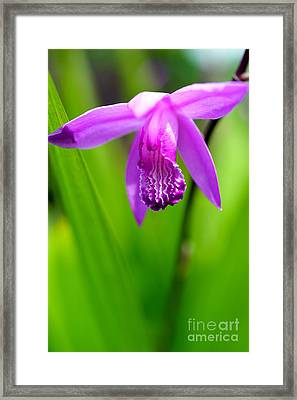 Hardy Orchid Framed Print