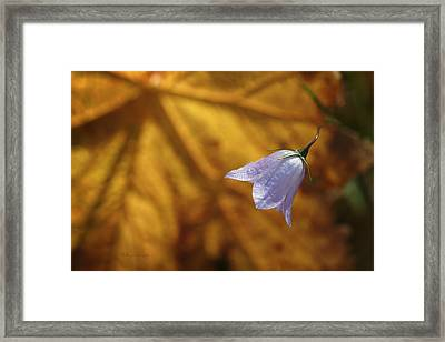 Hare Bell And Gold Leaf Framed Print