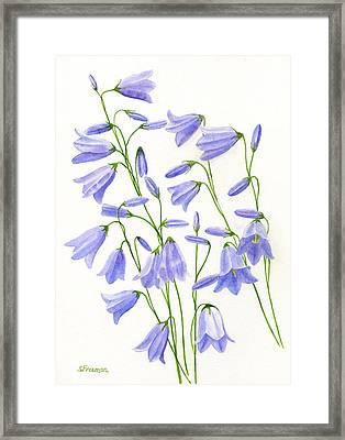 Harebells Framed Print by Sharon Freeman