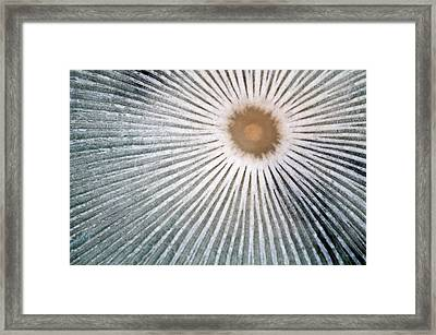 Hare's Foot Ink Cap Abstract Framed Print