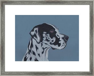 Harlequin Great Dane Framed Print by Sesh Artwork