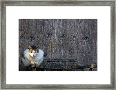 Framed Print featuring the photograph Harlequin Rustic by Chriss Pagani