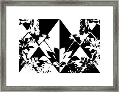 Harlequin Shadows Framed Print by Ginny Schmidt