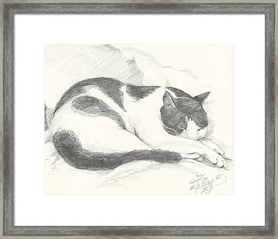 Harley Framed Print by Melinda Dare Benfield
