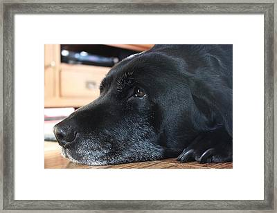 Harley  Framed Print by Nathan Whittaker