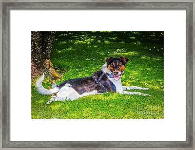 Harley Resting In Dappled Shade Framed Print
