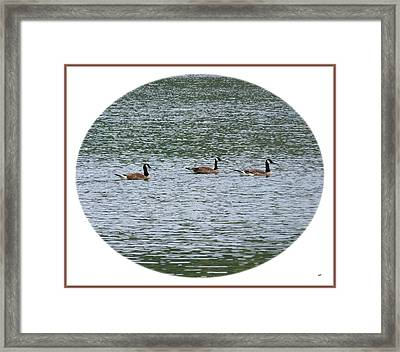 Harmonious Canada Geese Framed Print by Will Borden