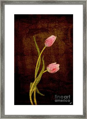 Harmony  Framed Print by Alana Ranney
