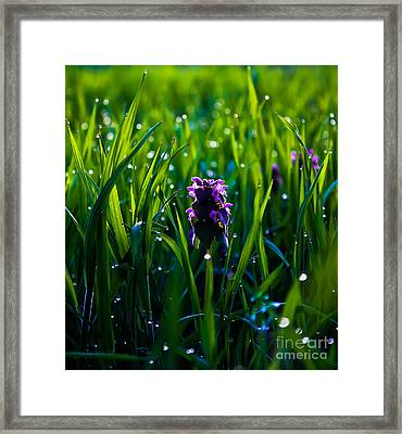 Harmony Of Feeling  -additional View Framed Print by Everett Houser