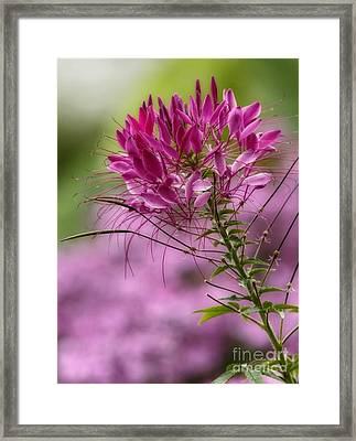 Harmony Of Nature  Framed Print by Inspired Nature Photography Fine Art Photography