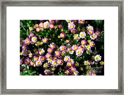 Framed Print featuring the photograph Harmony by Yew Kwang