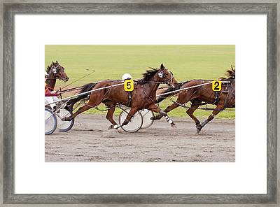 Harness Racing Framed Print by Michelle Wrighton