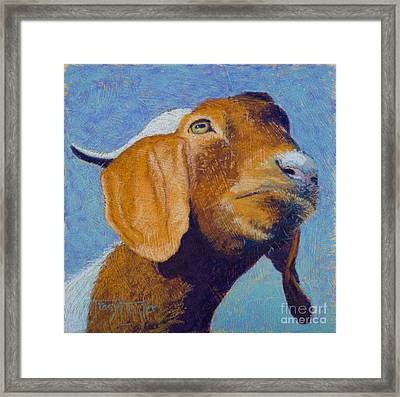 Harold Framed Print by Tracy L Teeter