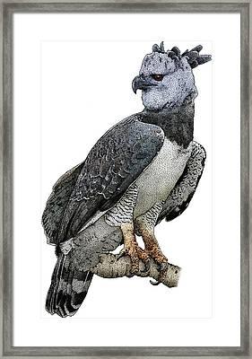 Harpy Eagle, Harpia Harpyja Framed Print by Roger Hall
