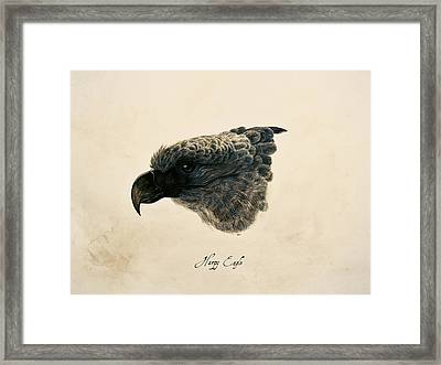 Harpy Eagle Framed Print by Rachel Root