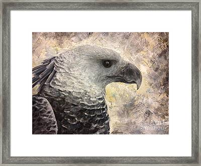Harpy Eagle Study In Acrylic Framed Print by K Simmons Luna