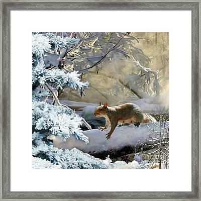 Harry In Winter Framed Print