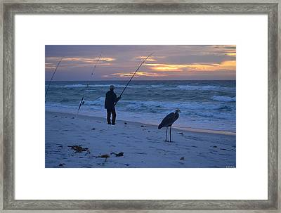 Harry The Heron Fishing With Fisherman On Navarre Beach At Sunrise Framed Print by Jeff at JSJ Photography