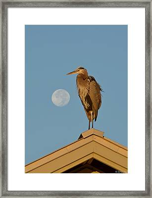 Harry The Heron Ponders A Trip To The Full Moon Framed Print by Jeff at JSJ Photography