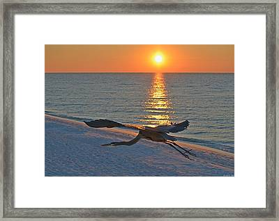 Harry The Heron Takes Flight To Reposition His Guard Over Navarre Beach At Sunrise Framed Print by Jeff at JSJ Photography