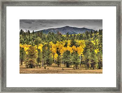 Hart Prairie Framed Print