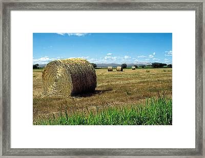 Harvest 3 Framed Print by Terry Reynoldson