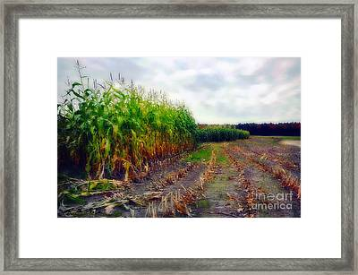 Harvest Framed Print by Deena Athans