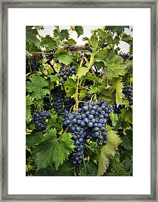 Harvest Divine Framed Print by Cricket Hackmann