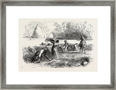 Harvest In France Reaping Framed Print