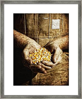 Harvest In His Hands Framed Print