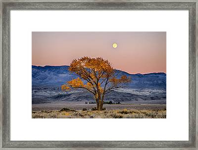 Harvest Moon Framed Print by Cat Connor