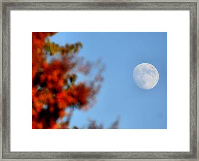 Harvest Moon Framed Print by Karen M Scovill