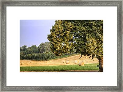 Harvest Morning Framed Print