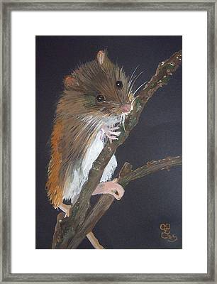 Harvest Mouse Framed Print