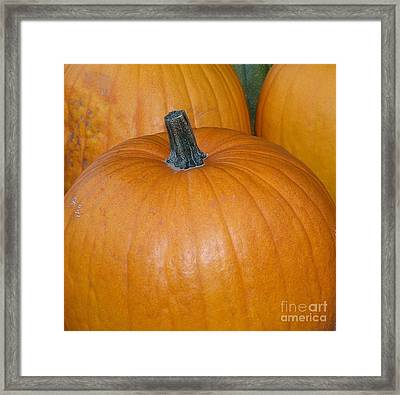 Framed Print featuring the photograph Harvest Pumpkins by Chalet Roome-Rigdon