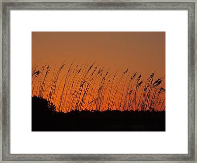 Harvest Sky And Sea Oats Framed Print