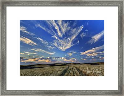 Harvest Sky Framed Print by Mark Kiver