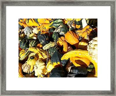 Harvest Squash Framed Print