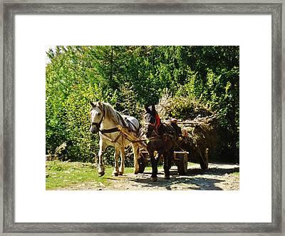 Harvest Time Framed Print by Alison Richardson-Douglas