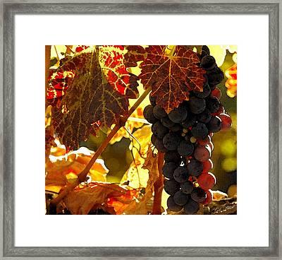 Harvest Time Framed Print by Cole Black