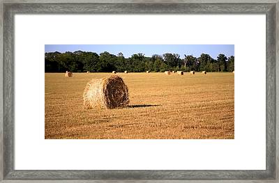 Framed Print featuring the photograph Harvest Time by Gordon Elwell