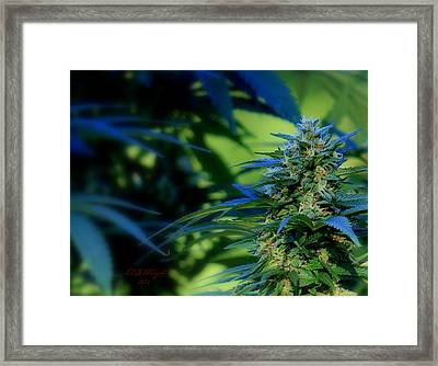 Framed Print featuring the photograph Harvest Time by Jeanette C Landstrom